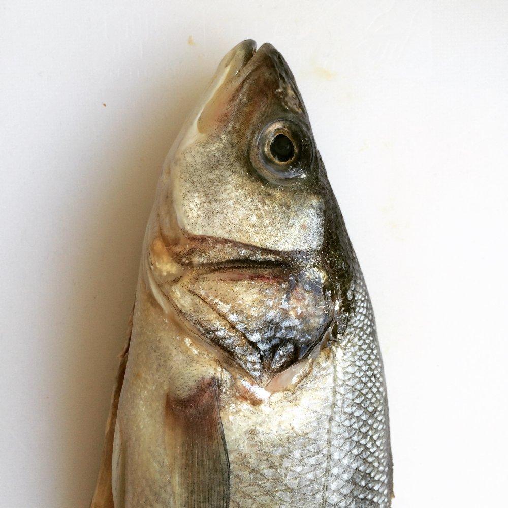 Ganzer Fisch