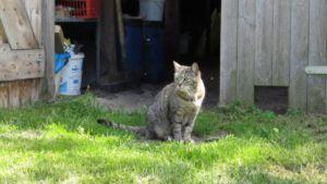 Katze im Schaugarten Keimzelle