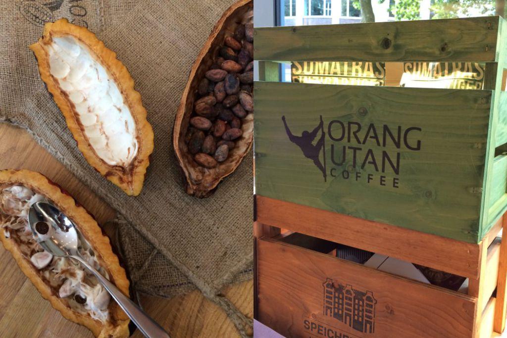 Kakaofrucht und Kaffee